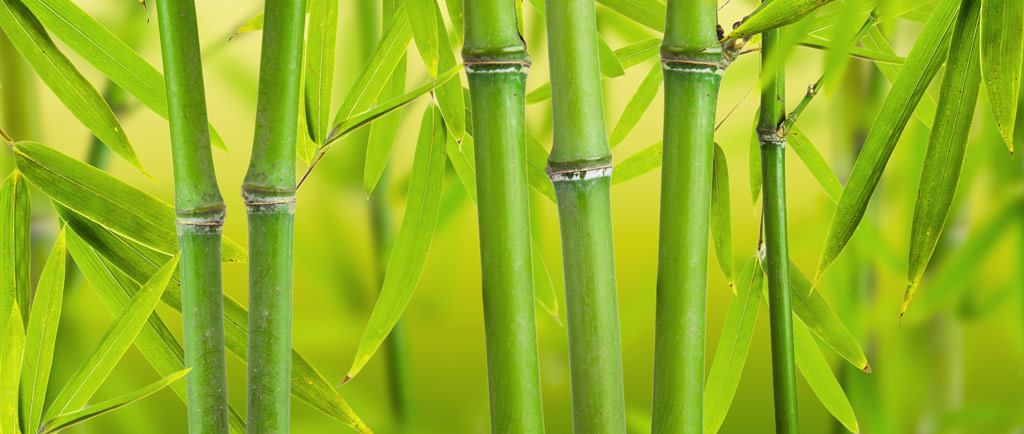 Rates-photo of bamboo