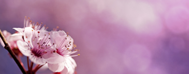 Special-Occasions-Pink-Flowers-Image